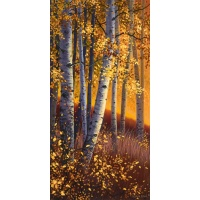 Sunset Aspens