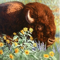 Bison & Balsam root