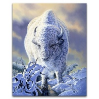 Winter & the White Bison