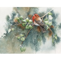 Northwest Songbirds- Red-headed House Finch