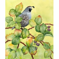 quail_in_blackberry_i-011