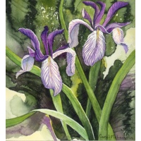 "'Spring Duet"" -Wild Iris -Original Watercolor"