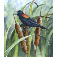 """Red Wing Spring"" -- Blackbird"
